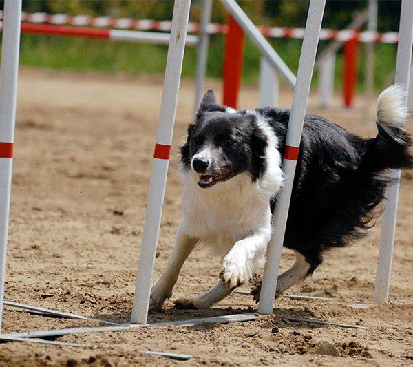 parque canino de agility