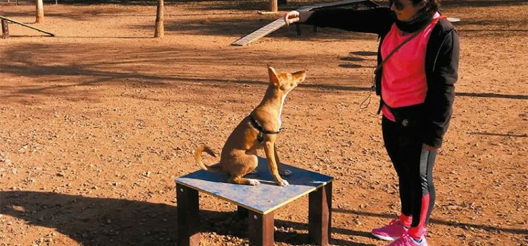 Mobiliario de agility para parques caninos