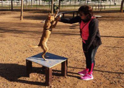 Ejercicio con perro en Mesa de Agility