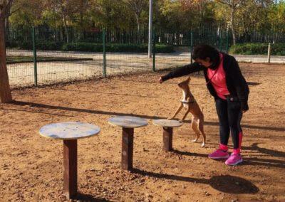 Ejercicio con perro en Plataformas Agility en parque canino