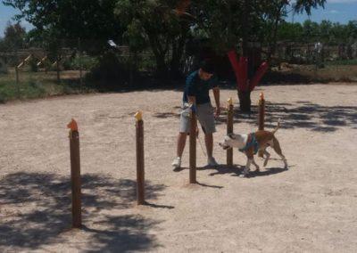 Entrenamiento con perro en Salalom Agility