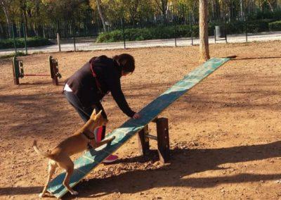 Parque con perro en obstáculo de Agility El Balancín