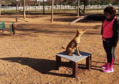 Parque canino con Mesa Agility